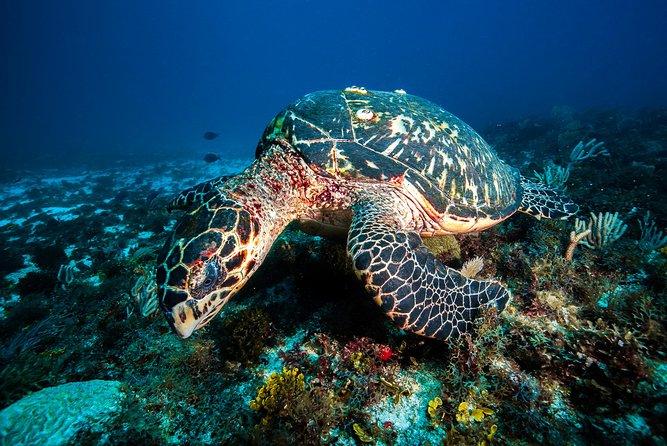 Morning Snorkeling Adventure från Cancun