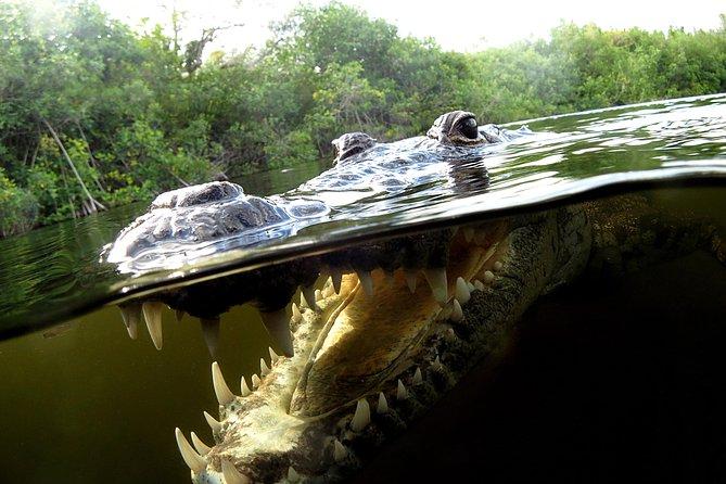 Privat liten grupp: Maya Community och Crocodile-Watching Combo Tour med Snorkling