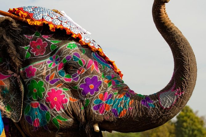 Excursão turística privada de dia inteiro em Jaipur