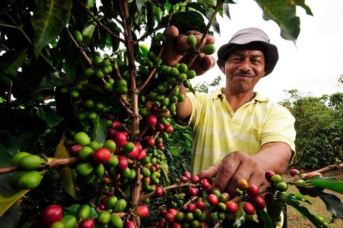 Coffee Farm Tour i Valle de Tenza