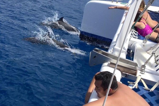 Dolphin Watch Catamaran Sailing Cruise voor de kust van Maui
