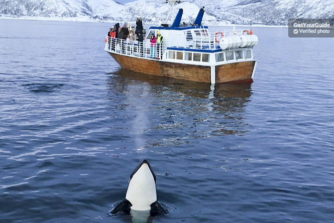 Roving Whale and Seabird Safari from Tromso
