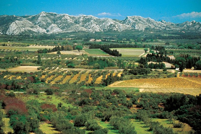 Alpilles and olive trees