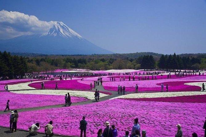 Pink Moss Phlox Festival og Mount Fuji Tour inkludert Strawberry Picking