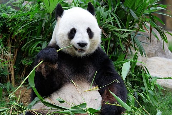 Private Chongqing Day Tour: Panda, E'ling Park, Three Gorges Museum