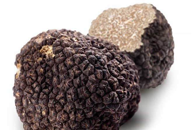 Truffle Hunting Experience with Gourmet Truffle Lunch from Florence