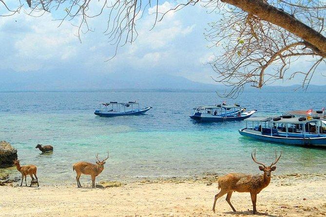 Explore West Bali National Park (2D/1N)