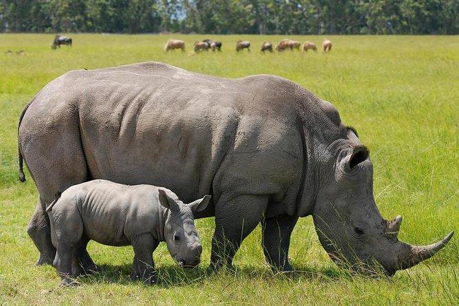 10 Days Maasai Mara photographer safari