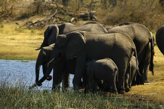5 Day Victoria Falls and Hwange National Park Accommodated Safari Tour