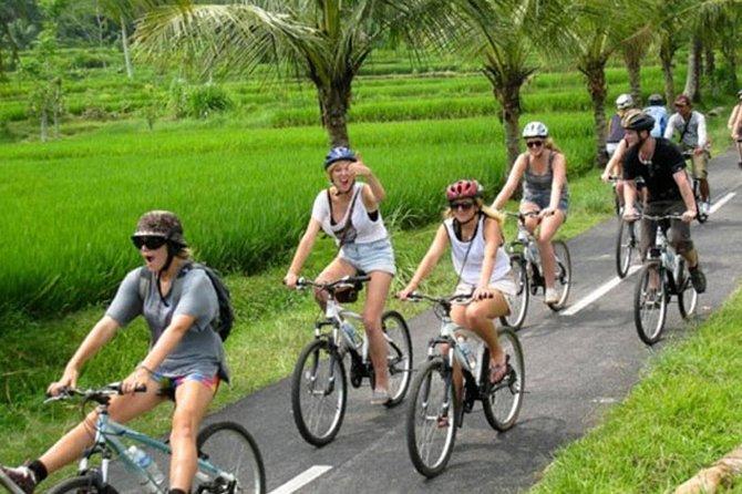 Rice Paddy Cycling Tour