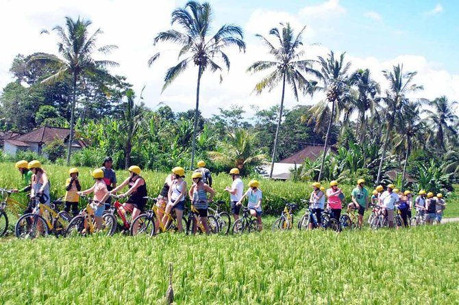 Rice Paddy Cycling Tour