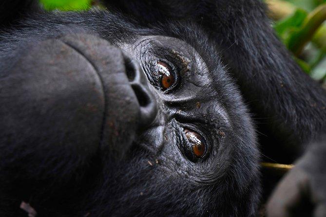 Uganda Gorilla Adventure
