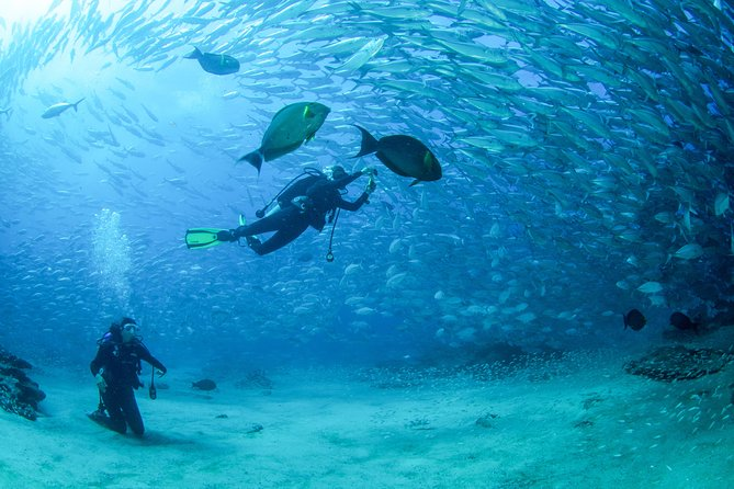 Become a PADI Open Water Certified diver (complete course)