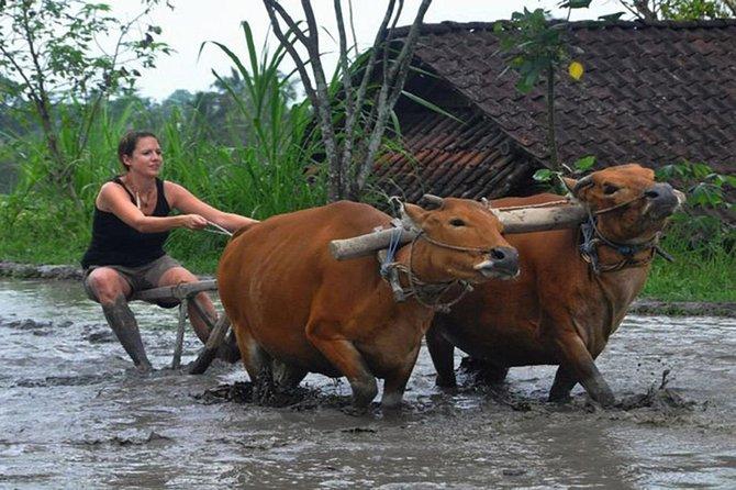 FD - True Bali Living