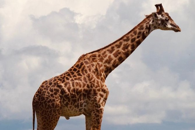 Half Day Tour Nairobi National Park
