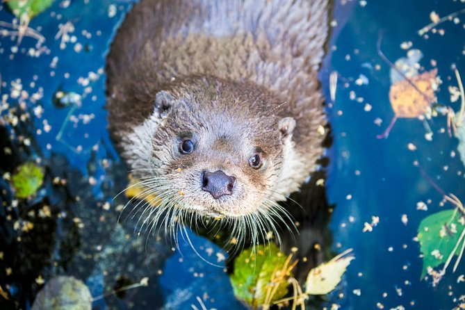 Arctic Zoo - Besök på Ranua Wildlife Park hösten