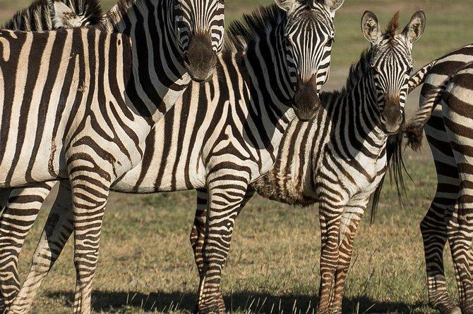Wildlifesafari 5 Days safari Tarangire NP ,Ngorongoro,Serengeti