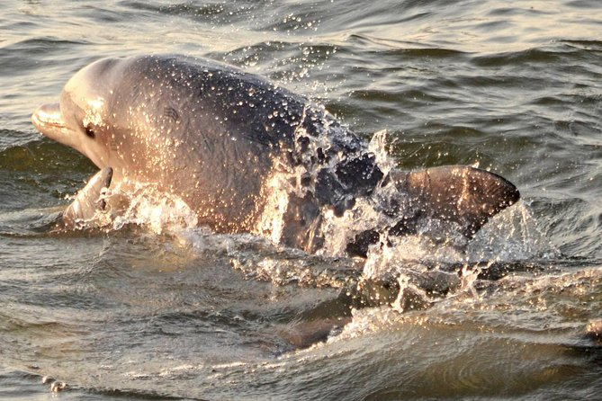 Sunset Dolphin Watch from Cape May photo 7