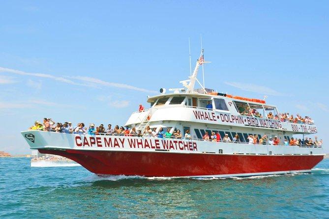 Walvis- en dolfijnen kijken cruise vanaf Cape May