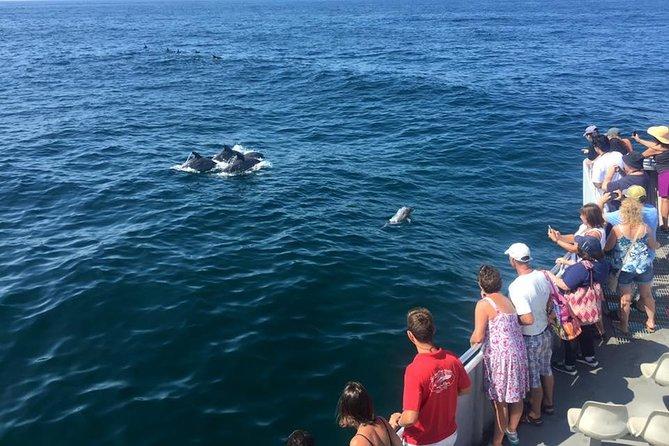 Dolfijnen kijken vanaf Cape May