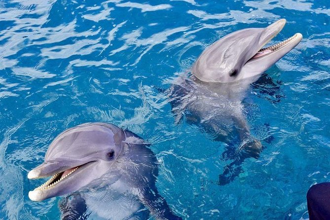 Dolphin House Royal VIP Snorkeling Sea Trip & Water Sports - Hurghada