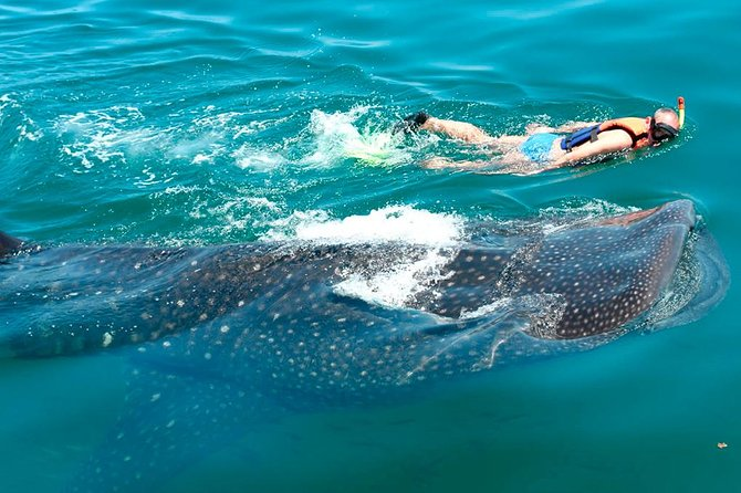 Whale Shark Tour Expedition