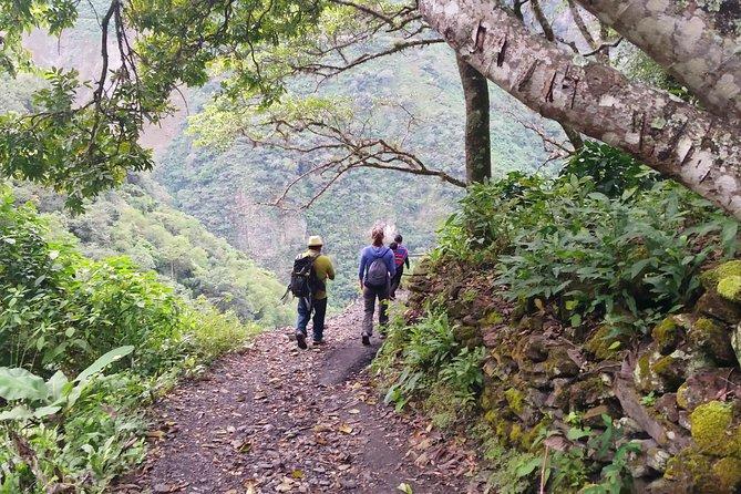 Coffee Jungle Tour to Machu Picchu