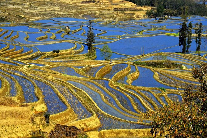 4days private tour Stone forest Yuanyang Terrace Jianshui old town from Kunming