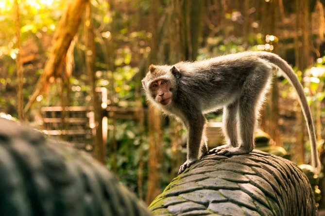 Ubud Tour : Monkey Forest, Tegalalang Rice Terraces, Waterfall and more Full Day