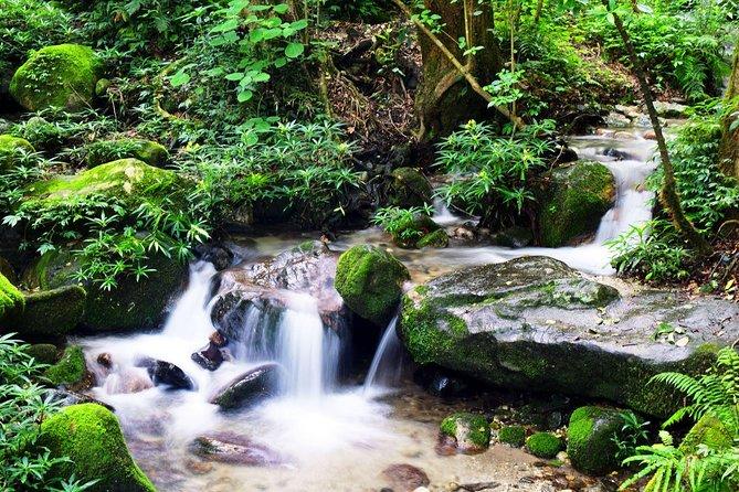 The best hiking experience from Shivapuri to Nagi Gumba to Baghdwar