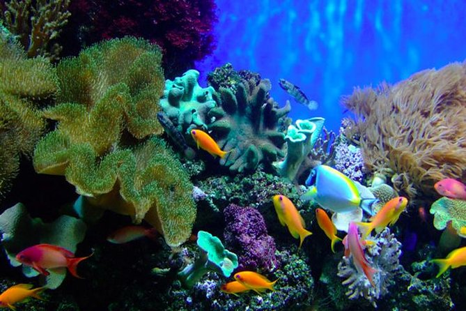 Snorkeling Tour Nha Trang