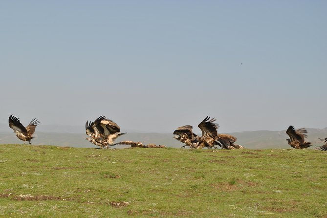 16-Day Private Trip: Birding at the Edge of the Tibetan Plateau from Lanzhou