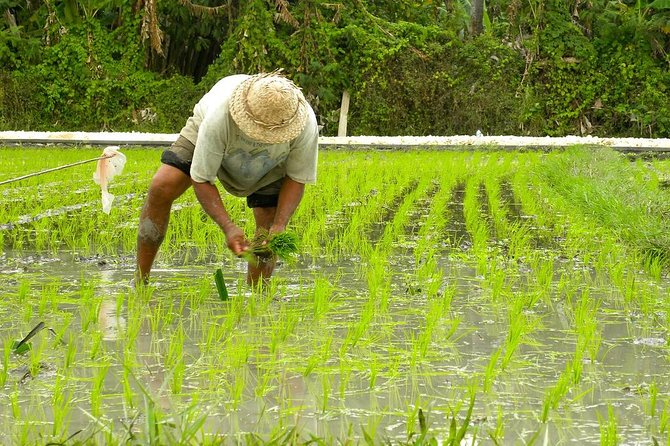 A Day in the Life of a Balinese Farmer photo 6