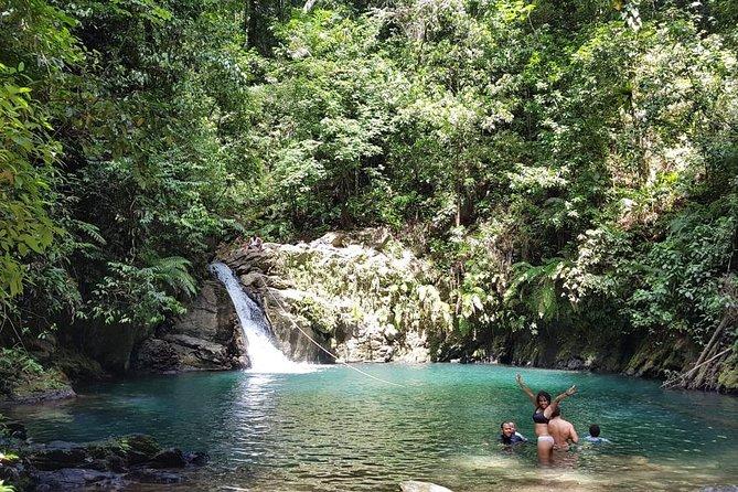 Trinidad Rainforest Hike to Waterfall