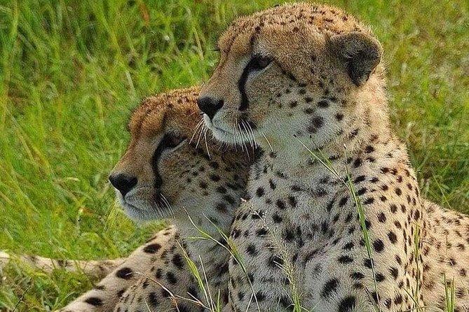 4 hours Nairobi National Park