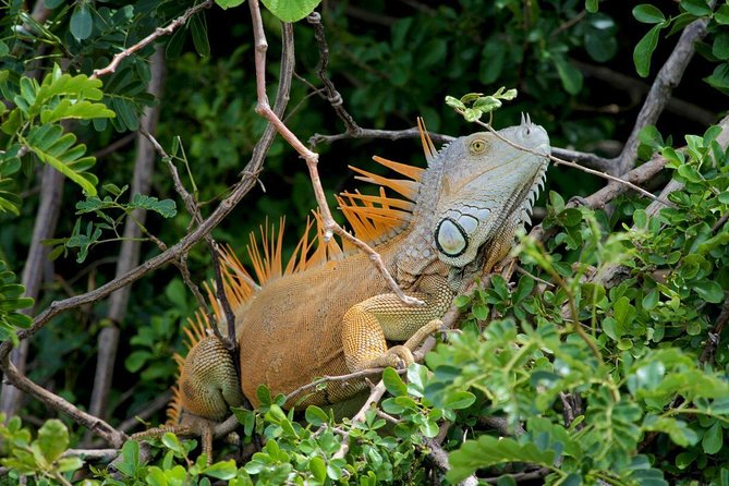 Palo Verde National Park Boat Tour and Liberia City Sightseeing