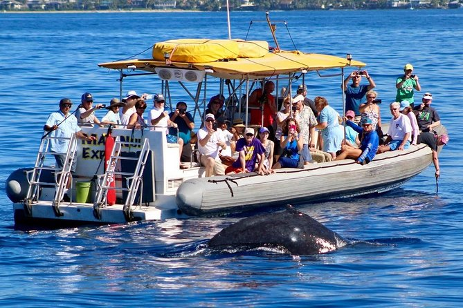Whale Watch on Explorer Super Raft