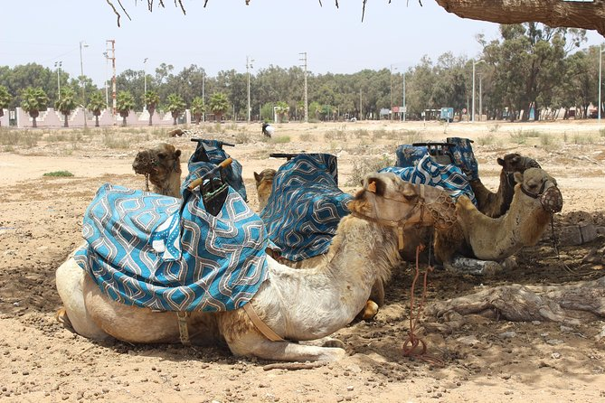 2 Hours Camel Ride In Agadir
