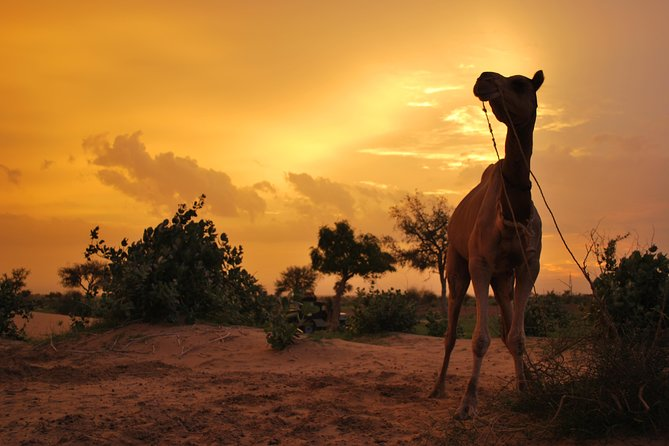 Overnight Camel Safari (remote And Isolated)