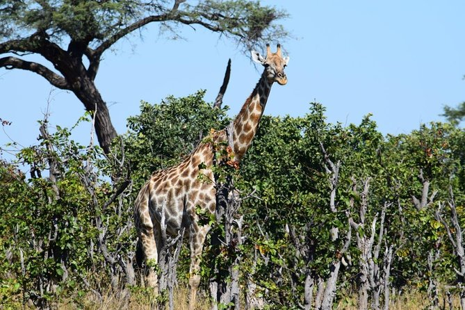 Chobe Extended Day Trip: From Victoria Falls photo 6
