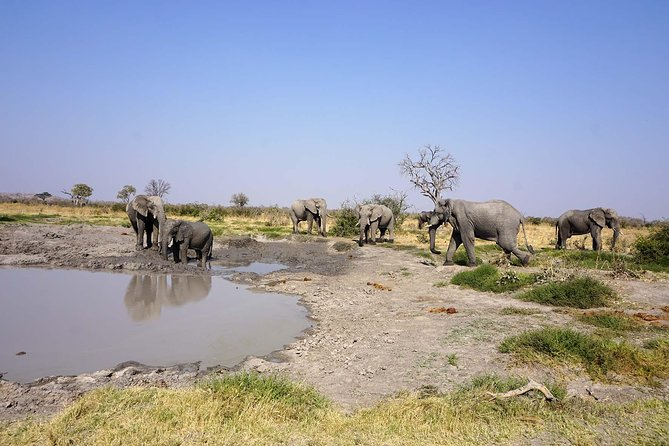 Chobe Extended Day Trip: From Victoria Falls photo 7