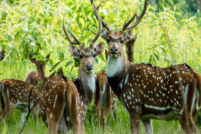 Luxury Chitwan National Park Tour 1 Night-2 Days