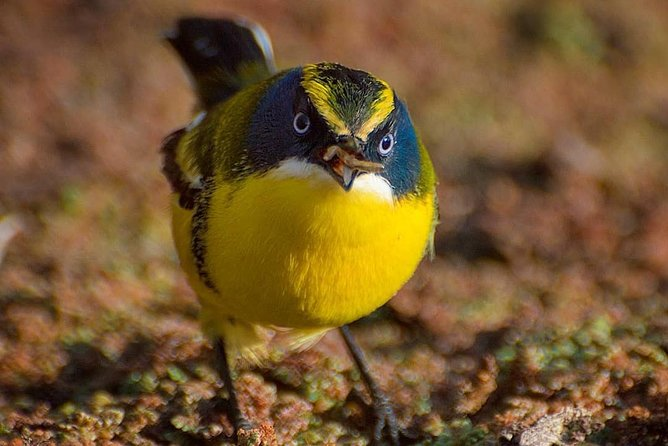 Birdwatching Wetland of Mantagua