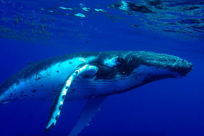 Swim with humpback whales and ocean animals in a private tour