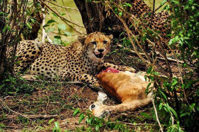 4 Days Tanzania Luxury Safaris