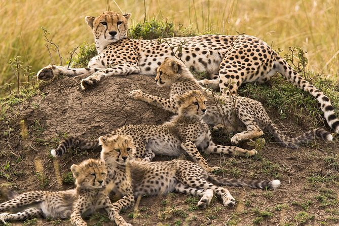 4 Days Tarangire Serengeti Ngorongoro Crater photo 8
