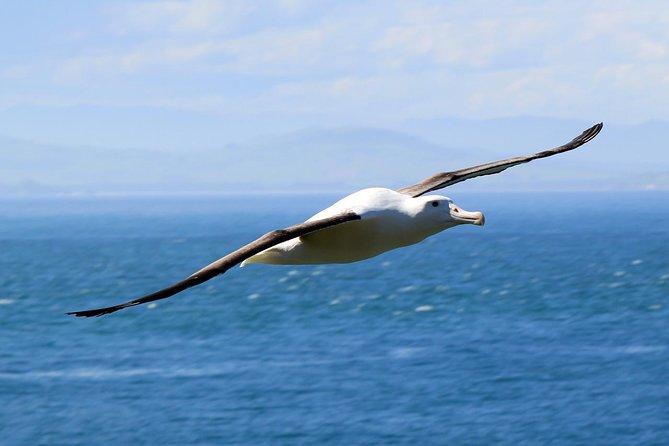 Dunedin Peninsula Wildlife Encounter