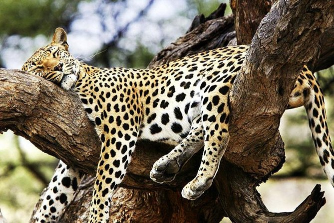 5 Days Masai Mara,, Nakuru and Lake Naivasha Safari from Nairobi