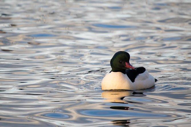 Morning Birding Along Lake Geneva