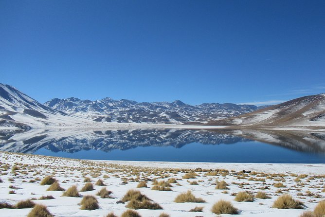 Small-Group Tour to Altiplanic lagoons, Atacama saltflat & Flamingo reserve